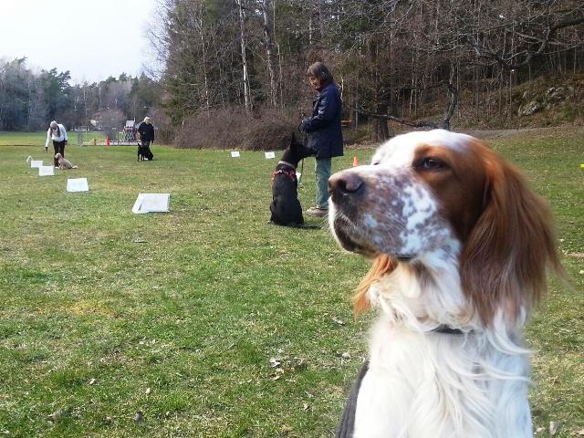 Glada Jyckar - Temakurser för hund - Rallylydnad