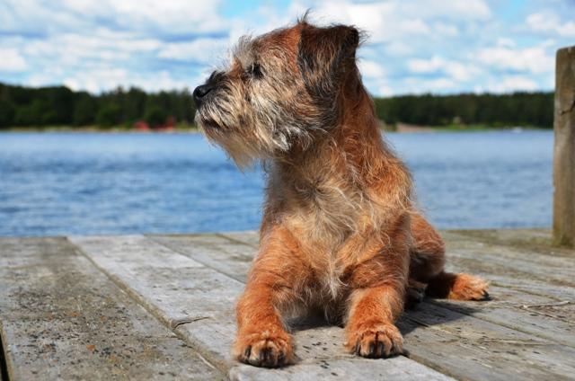 Privatträning och hundkurser på Blidö