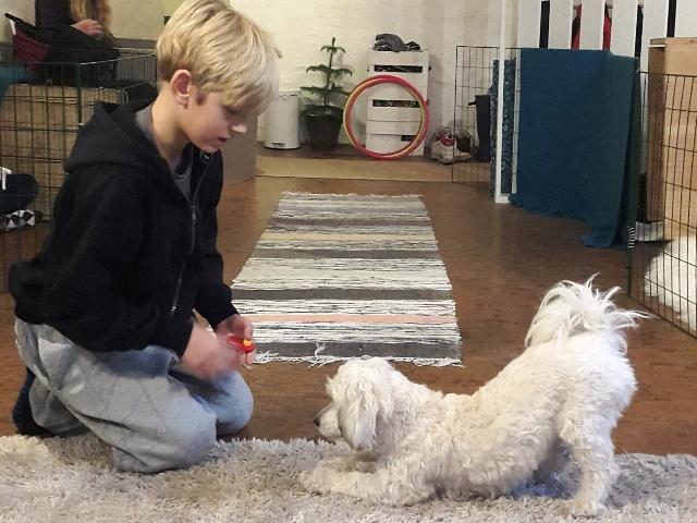 Tricksträning med hund